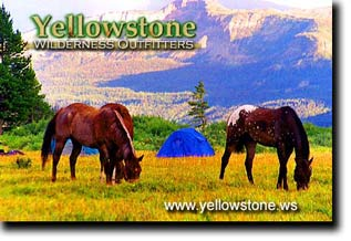 Yellowstone Pack Trips